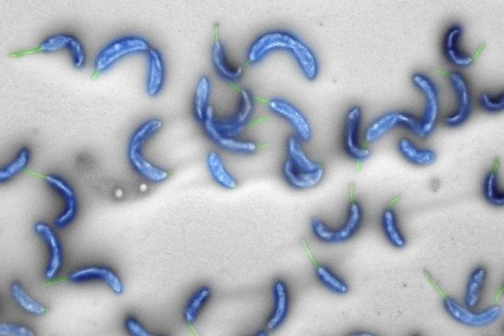 First bacterial genome created entirely with a computer