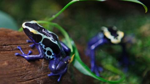 Alarming Study Concludes Frogs Are Undergoing a 'Catastrophic' Global Die Off