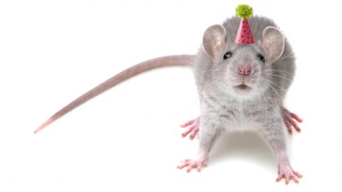 MDMA Made Older Mice Start Socializing Like Teenagers
