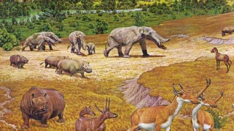 Meet the Wild Creatures That Roamed Ancient Texas