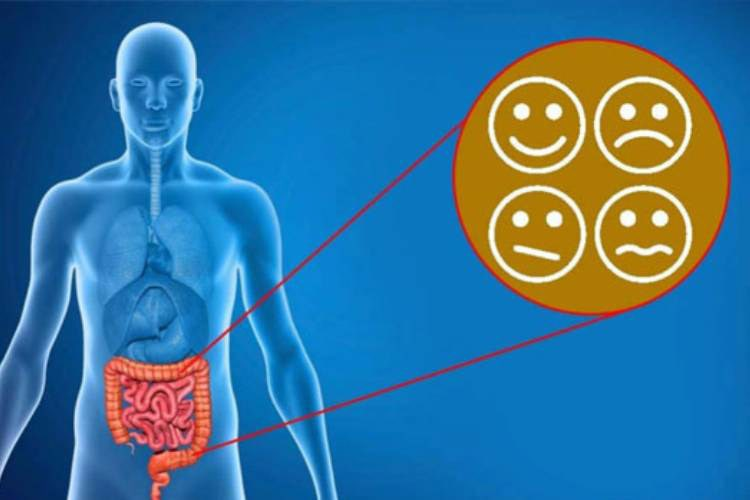 Transplanting Gut Bacteria Alters Depression-Related Behavior, Brain Inflammation in Animals