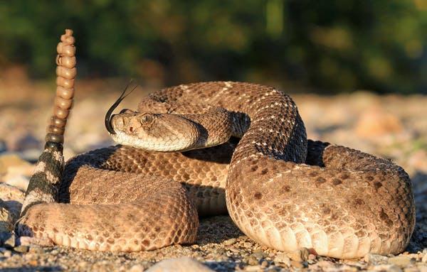 20200326.Why-snakes-produce-venom-01.jpg