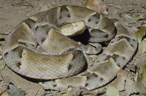 20200326.Why-snakes-produce-venom-03.jpg