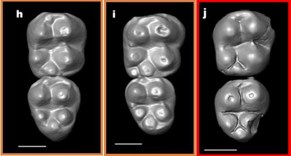 20200415.Monkey-teeth-fossils-hint-several-extinct-species-crossed-the-Atlantic-01.jpg
