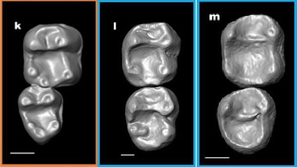 20200415.Monkey-teeth-fossils-hint-several-extinct-species-crossed-the-Atlantic-02.jpg