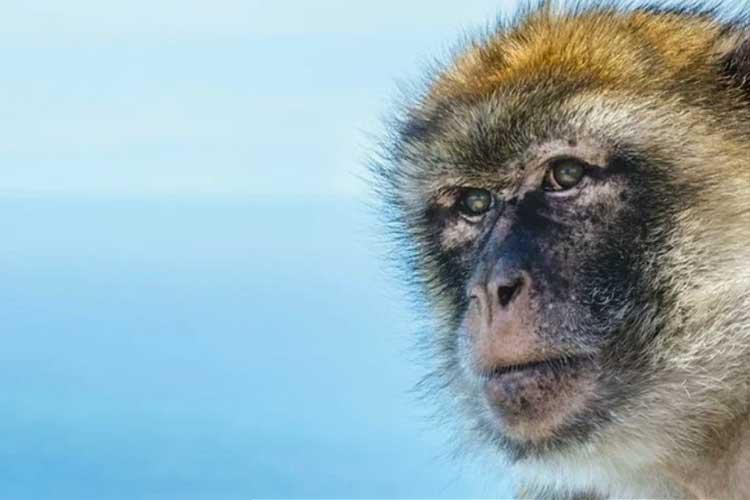 Monkey teeth fossils hint several extinct species crossed the Atlantic