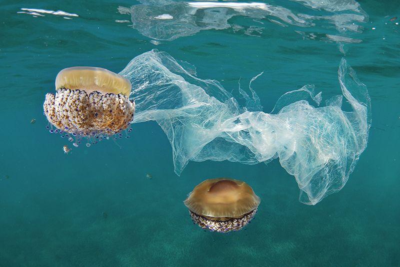 Planet's ocean-plastics problem detailed in 60-year data set